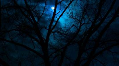 Dark Woods Wallpapers Anime Background Scenery Backgrounds