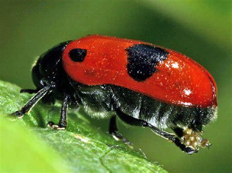 was fressen ameisen was fressen ameisen was fressen ameisen was fressen ameisen fressen insekten scinexx