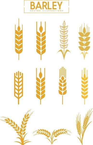 barley  vector    vector