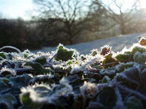 Free Stock photo of winter frosts | Photoeverywhere