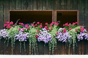 Blumenkästen Bepflanzen Sonnig : efeu im blumenkasten anpflanzen und richtig pflegen ~ Frokenaadalensverden.com Haus und Dekorationen