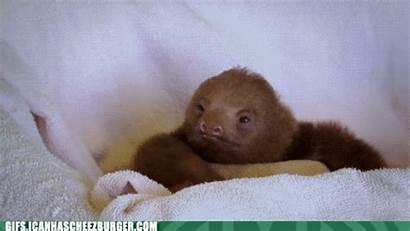Funny Animal Gifs Odd Animals Sloth Animated