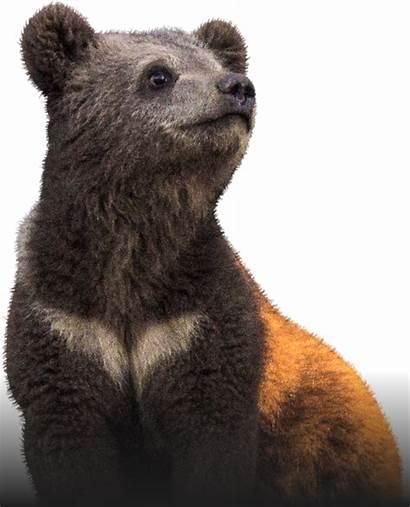 Bear Mansur Donationalerts
