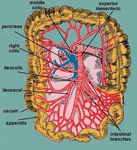 Cwargubuh  Inferior Mesenteric Artery