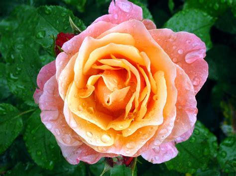 Die Schönsten Gartenzwerge by Inspiration F 252 R Den Garten Die Meisterwerke Der Gartenkultur