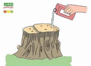 Tuer Un Arbre Avec De L Acide : d truire une souche d 39 arbre rapidement jardipartage ~ Dailycaller-alerts.com Idées de Décoration