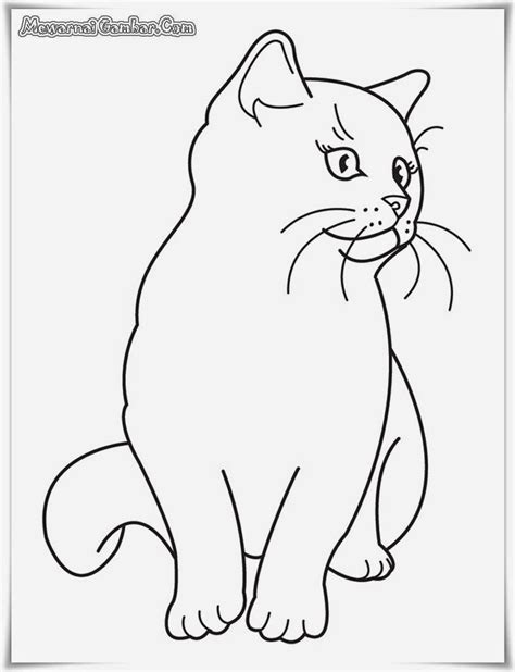 buku mewarnai gambar binatang  gambar polos