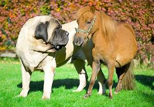 9 of the world's largest dog breeds | MNN - Mother Nature ...