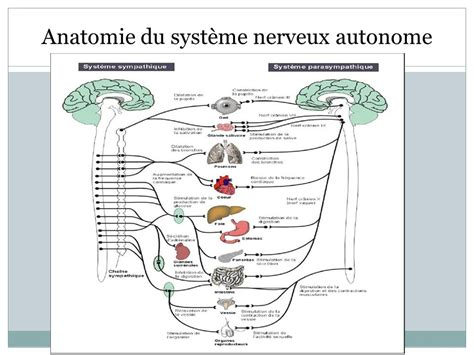 Anatomie du système nerveux pdf telecharger