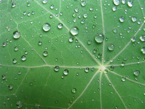 imagen de hoja verde  gotas de lluvia foto gratis