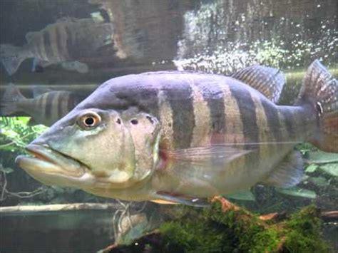 aquarium d amneville les thermes