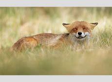 Fotowettbewerb Das sind Ihre lustigsten Tierfotos [GEO]