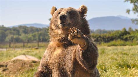 small caps beat dow   avoid  bear market investor