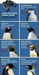 2 February 2012 Closer Look at Emperor penguins   PolarTREC