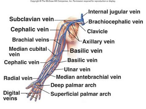 similiar basilic vein diagram keywords, Cephalic Vein