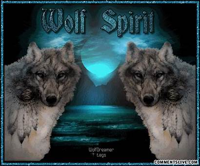 Wolf American Native Spirit Quotes Wolves Indian