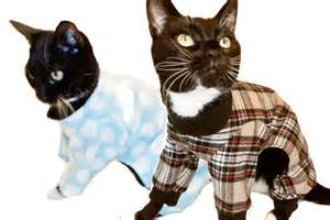 cat s pajamas drennan cat s pajamas