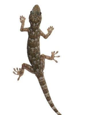 Lizard Pictures - QyGjxZ