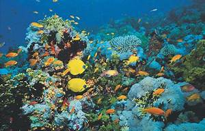 The Marine Biome: A Journey Through the Intertidal Zone  Aquatic