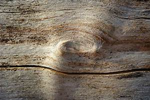 Free, Images, Tree, Nature, Rock, Branch, Structure, Grain, Leaf, Floor, Trunk, Wall, Profile