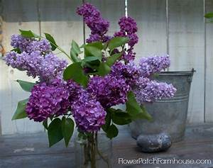 easy rooting lilacs from cuttings flower patch farmhouse