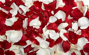 The gallery for --> Rose Petals Falling Gif