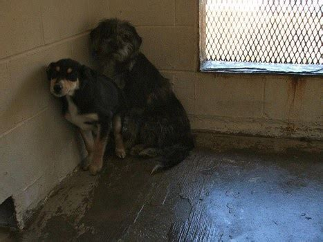 les  meilleures images du tableau stop cruelty abuse