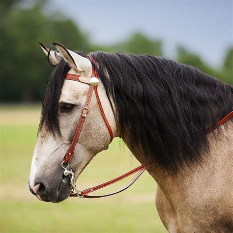 bridle fitting western head saddleupcolorado tone