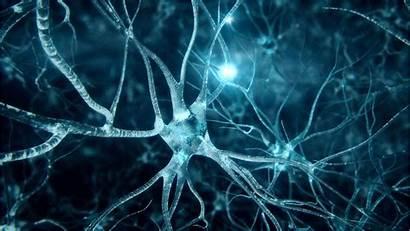 Wallpapers Neuro Neuroscience 4k