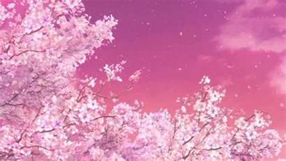 Blossom Cherry Falling Petals Gifimage