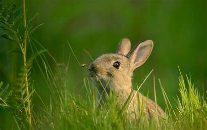 Rabbit Wallpapers Animal Background Wall Abyss Alphacoders