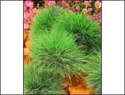 Blumenkästen Bepflanzen Sonnig : winterharte balkonpflanzen herbst winter ganzj hrig kaufen bei harro 39 s pflanzenwelt ~ Frokenaadalensverden.com Haus und Dekorationen