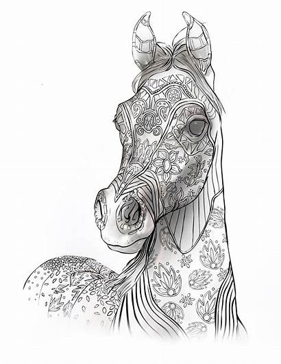 Coloring Pages Adult Animals Horse Printable Horses