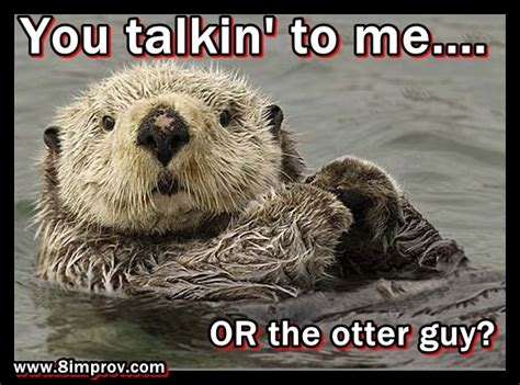 Sea Otter Meme - 17 best images about you otter know on pinterest eat healthy otter meme and baby otters