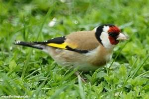 Singvögel Im Garten : singv geln im garten helfen florilegium ~ Whattoseeinmadrid.com Haus und Dekorationen