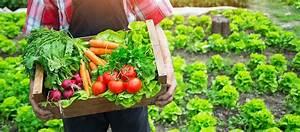 Que Planter En Juin : jardiner au potager en juin quels fruits et l gumes ~ Melissatoandfro.com Idées de Décoration