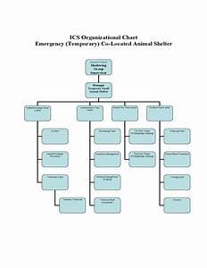 Animal Care Resume Ics Organizational Chart Animal Shelter Free Download