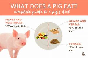 What Does A Pig Eat