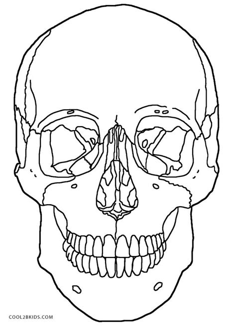 skull coloring book anatomy skull coloring pages printable sugar skulls