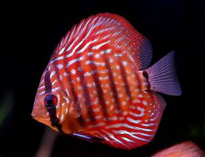 Tropical Fish Keeping | Tropical Fish Keeping - Part 4