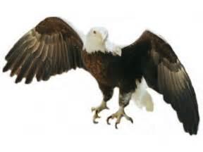 American Bald Eagle Clip Art