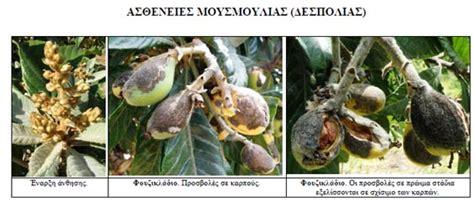 http://www.froutonea.gr/gr/poreia-proionton/alla-proionta/tehniko-deltio-mousmoulia