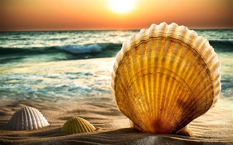 shell awesome hd wallpapers  high quality  hd