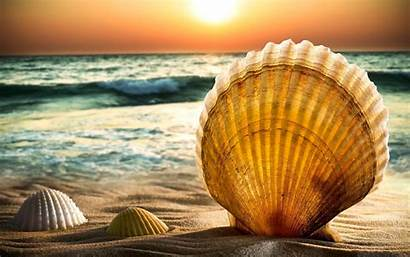 Shell Wallpapers Awesome