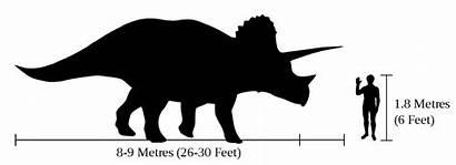 Triceratops Human Svg Comparison Plik Een Bestand