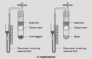 96 Using Respirometers