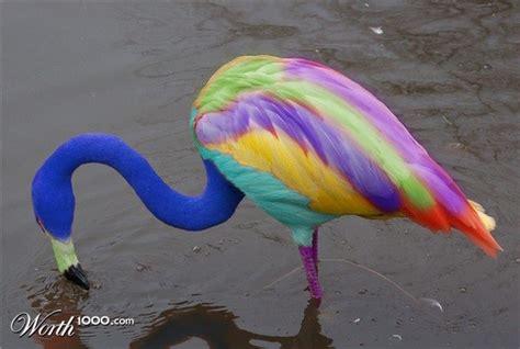 rainbow flamingo color magic flamingo rainbow