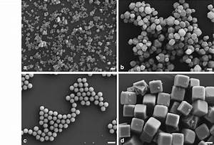 Sem Images Of Calcium Fluoride Particles Prepared By