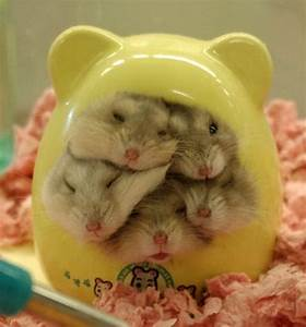 Hamster home.