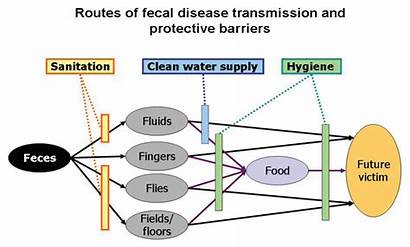 Sanitation Health Productivity Diagram Wagner Business Case